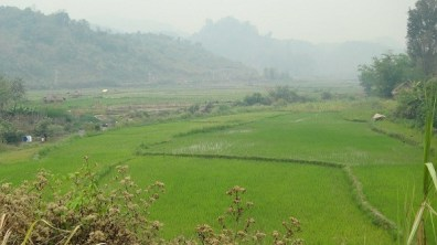 Vieng Thong - Beautiful Rice Paddies